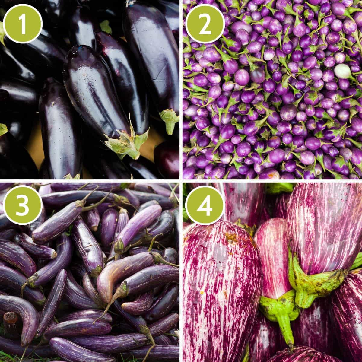Collage of 4 photos showing different types of eggplant: Globe, Indian, Japanese and Fairy Tale